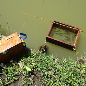 タナゴ釣りは竹竿で