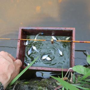 タナゴ釣りはバランスとテンポ