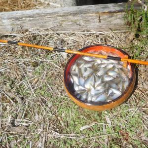 タナゴ釣りはハンターカブで