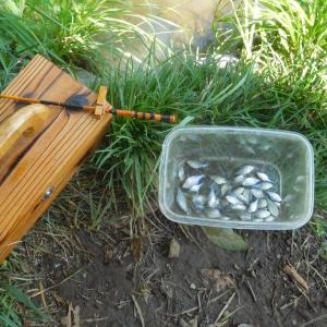 タナゴ釣りは楽しい