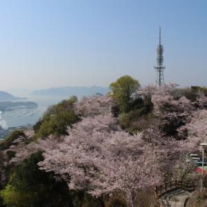 黄金山の桜2020.04.04