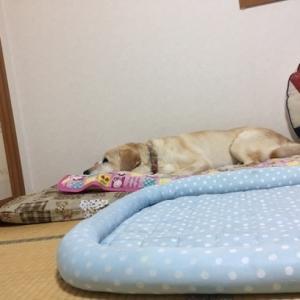 ジニ-を一人で寝かすわけには