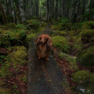 苔の世界〜八千穂高原