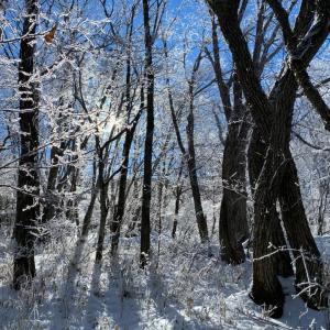 長野のとある森