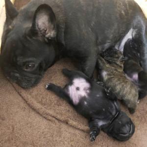 アリエル、エルフィ赤ちゃん順調でーす!