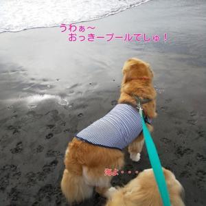 犬生初の海を見に鎌倉&江の島へ♪(江の島編)