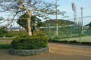 おはよう。奥武山公園