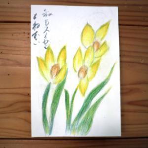 色鉛筆画 ~ 水仙 ~