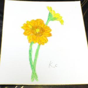 色鉛筆画 ~ ガーベラ ~