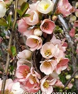 梅の花に癒される♡ほのかな良い香り