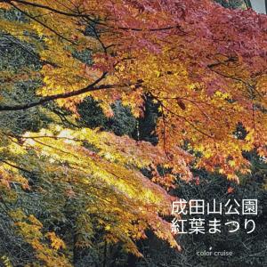 成田山公園紅葉まつり②あぁ、黄金色に癒される