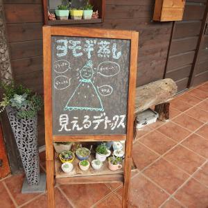 自分メンテナンスと多肉植物