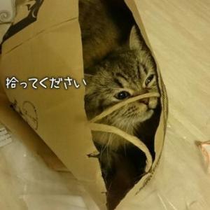 真夏は猫鍋にかぎる