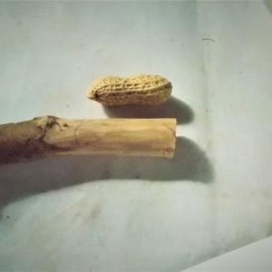ピーナッツの根付を作る その1