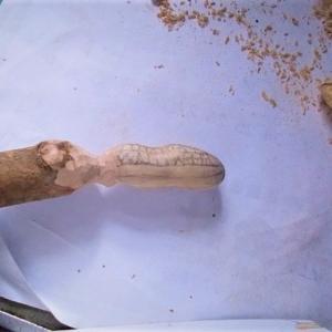 ピーナッツの根付を作る その2