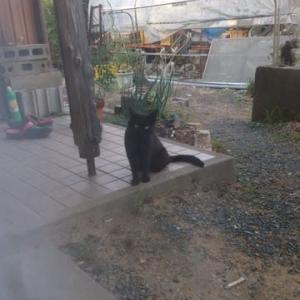 二度見! 黒猫