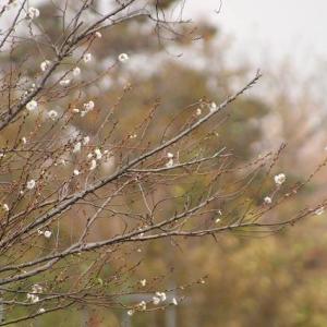 冬桜と極楽寺の街