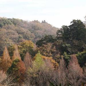 鎌倉谷戸の色とフラミンゴの正体