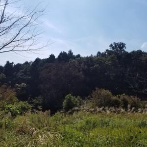 北鎌プチハイクと東慶寺の花