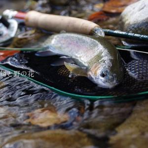 9月13日の釣り