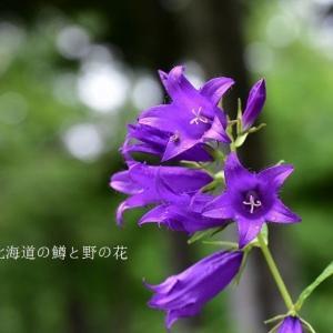 雨の日の青い花