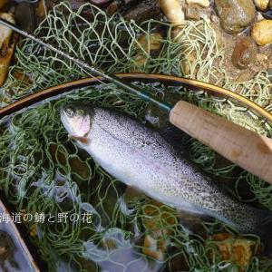 魚影が薄くなった川
