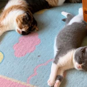 子猫は眠る