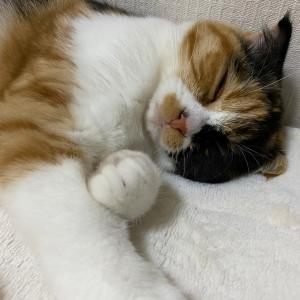 ★眠いけど・・・