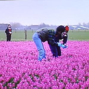 きよしはオランダへ行きました。