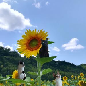 猫の日・・・感想
