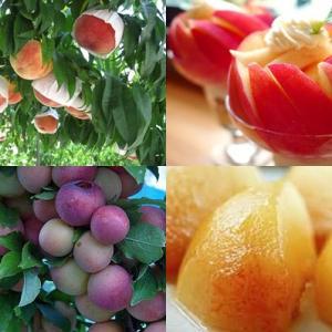 【食育クイズ:Vol.264】夏が旬の「桃」と「すもも」!生産量日本一はどこ?