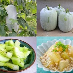 【食育クイズ:Vol.280】夏の旬野菜「冬瓜(とうがん)」!生産量日本一はどこ?