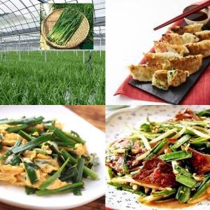 【食育クイズ:Vol.281】夏のスタミナ食に欠かせない「ニラ」!生産量日本一はどこですか?