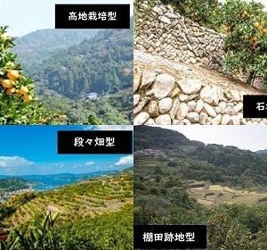 【食育クイズ:Vol.674】「有田みかん」の栽培方法で最も多いのはどんな方法?