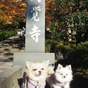 円覚寺の紅葉。
