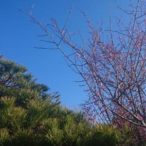 梅の花&メダカ容器