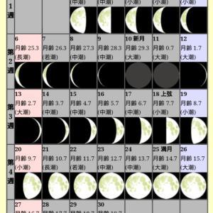 明日は満月ですね