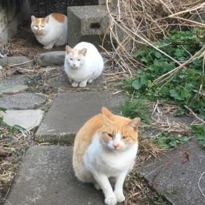 お世話する人を失う地域猫たち。