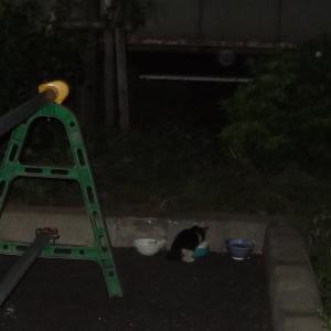 台風を乗り越えた子猫を保護