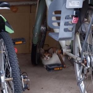 三毛の子猫さんを保護と、もっちのこと。