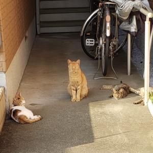 バス通り沿いの猫たち