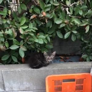 ひとりぼっちの子猫さん