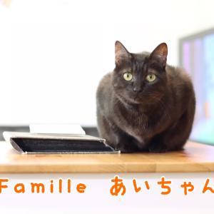 黒猫 あいちゃん 里親様募集♡