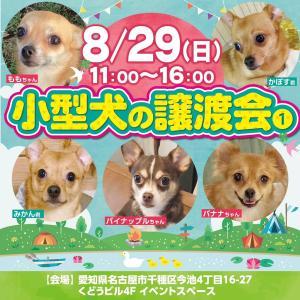 8/29(日) 小型犬の譲渡会を今池で開催します!