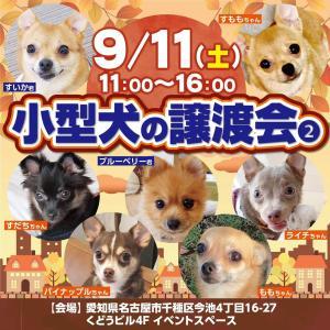 9/11土曜日 今池で譲渡会開催します!