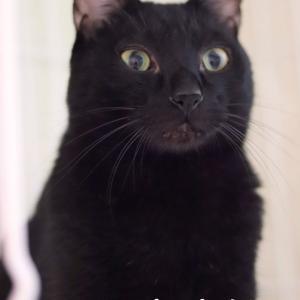 黒猫 カントくん 里親様募集♡