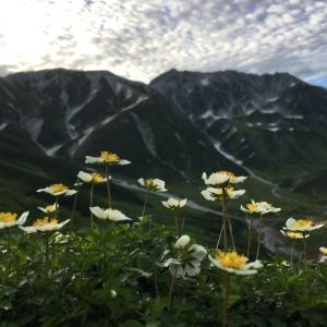 富山城址公園で朝ラン〜山の寒さが恋しかったです