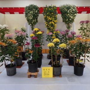 柳瀬文化祭