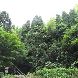 6月17日の石見銀山*本谷①*
