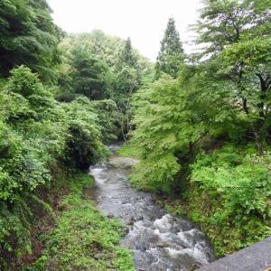 6月のbirdwatching in 大森①